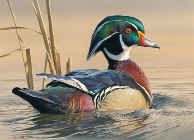 2012 federal - wood duck