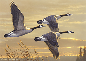 Canada Geese by James Hautman