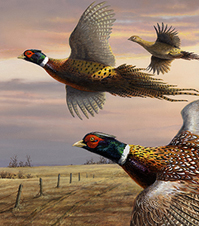 Pheasant painting detail