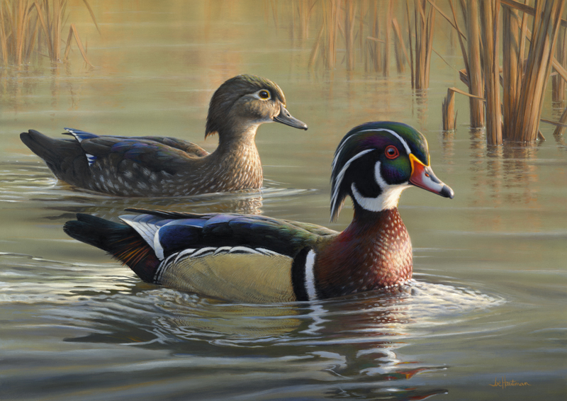 Duck painting