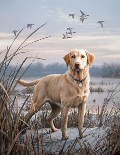 The gallery for --> Yellow Lab Hunting Wallpaper