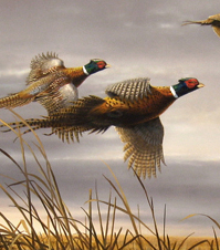 Flying Duck Painting Hautman Brothers Wildl...